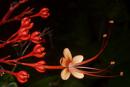 vacker blomställning