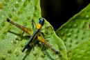 En gräshoppa