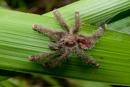 En tarantula