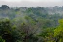 Primär regnskog