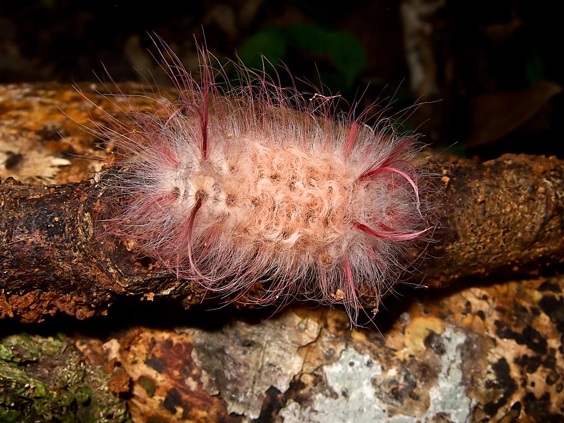 A dangerous-looking caterpillar