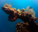 Reef scenary