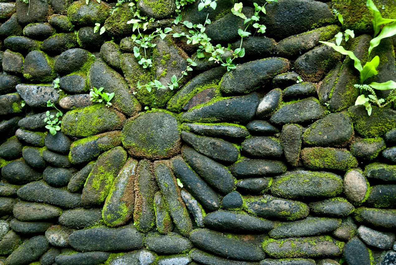 Pattern in a stone wall. The Balinese love moss coverage and carefully cultivate it
