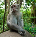 Ubud Monkey Forest Sanctuary