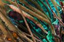 Trumpetfish (Aulstomus maculatus)