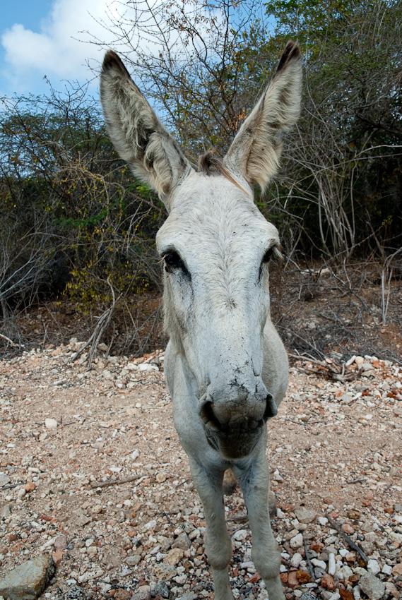 One of many donkeys