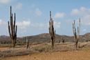 landskap med kaktus