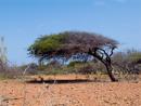 träd format av vinden