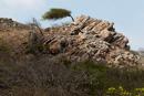 vindpiskat träd på klippa