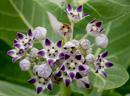 A tree flower