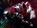 A beautiful tube worm (Sabellidae)