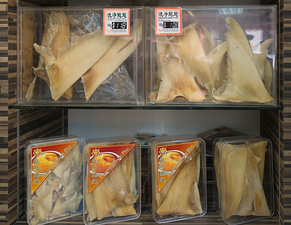 Fins from slaughtered sharks go at a high price