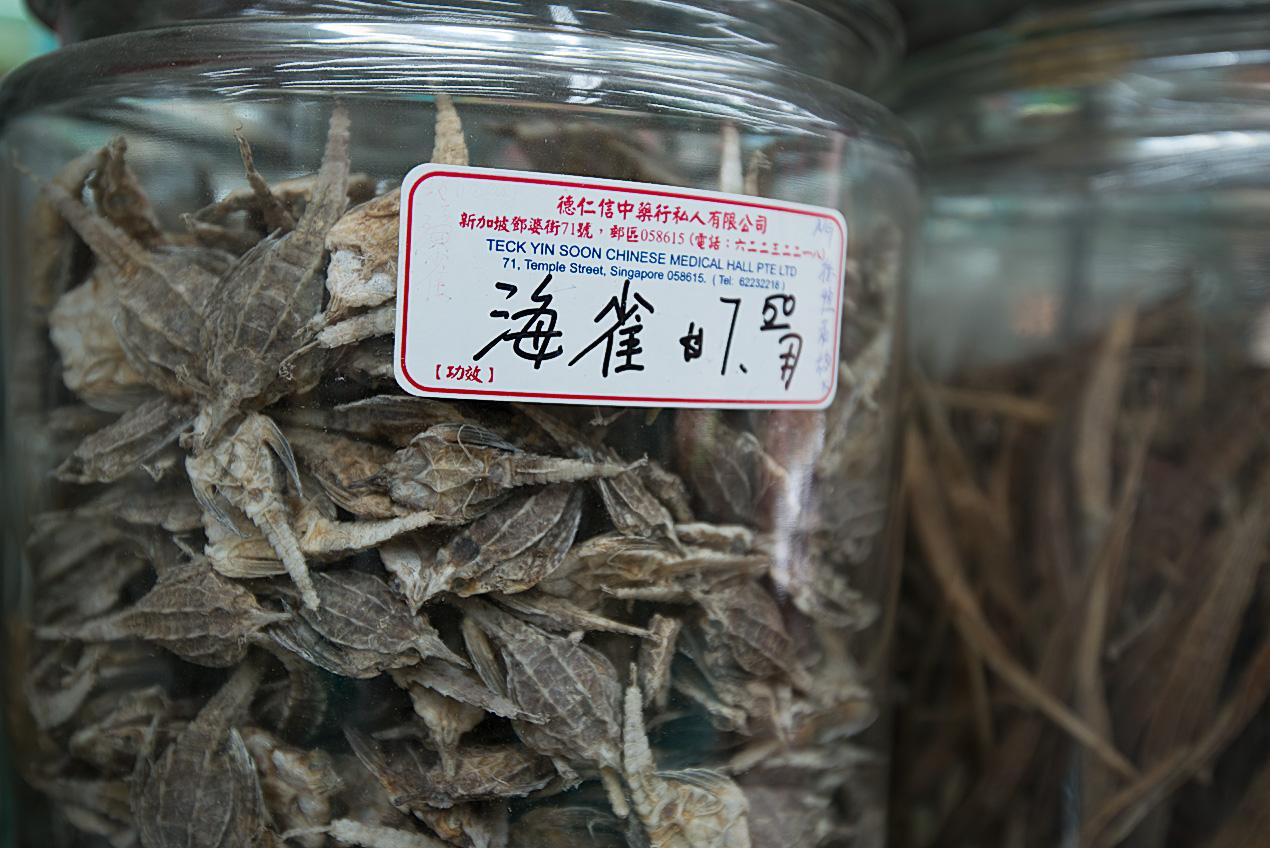 dead, dried seamoths