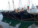 The Whaling fleet