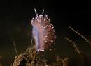 Pellucid aeolis (Flabellina pellucida)