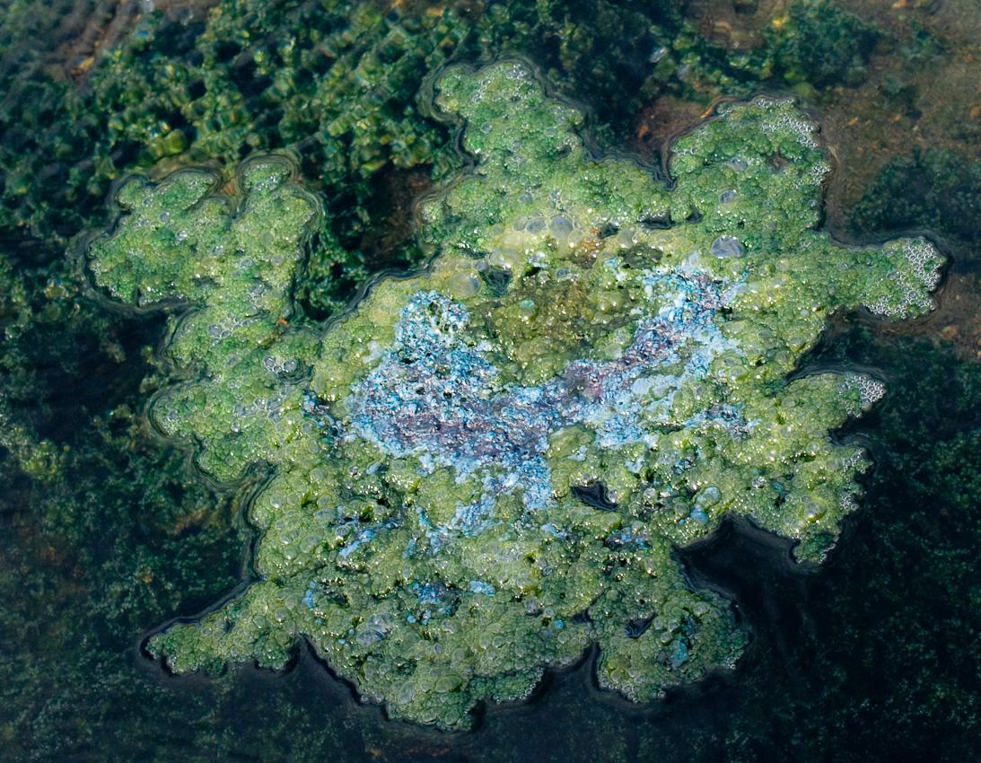 Miniatyr-island bildat av grönalger i det varma vattnet