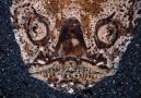 Stjärnskådarfisk (Uranoscopus sulphureus)