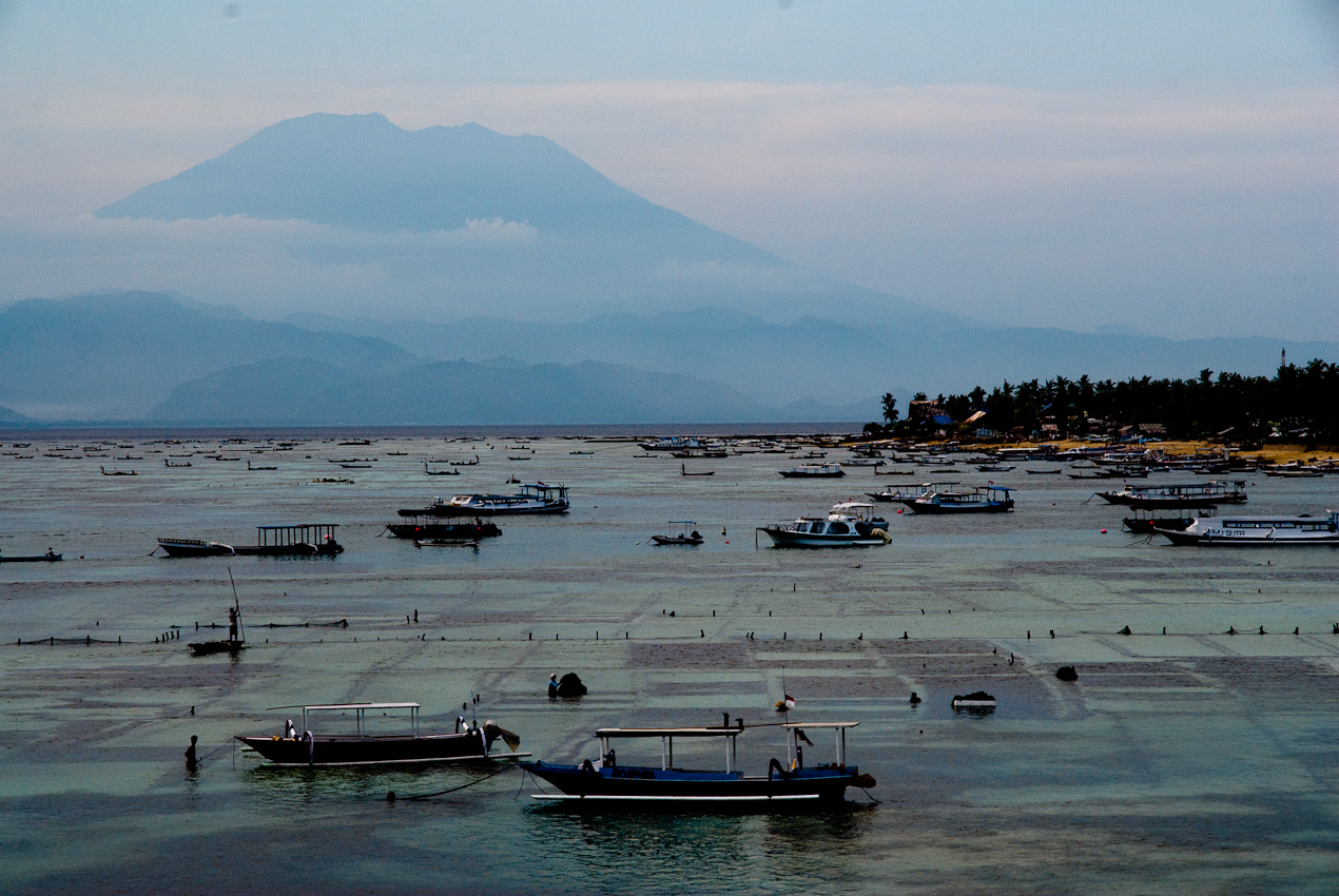 All of the protected bay is used for farming. Gunung Agung in the background