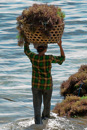 Women carry one basket