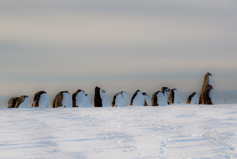Penguines marching
