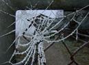 Rime frost on cobweb
