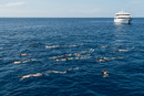 Whaleshark hunting