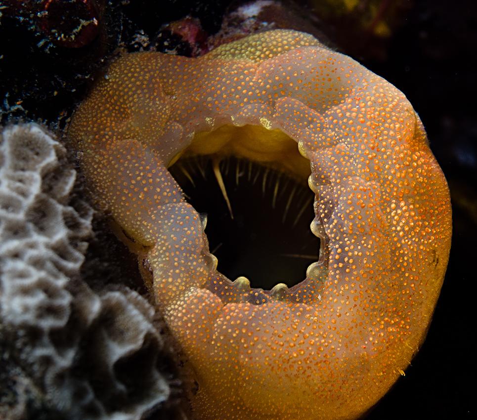 A sea squirt