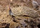 Camouflaged slug