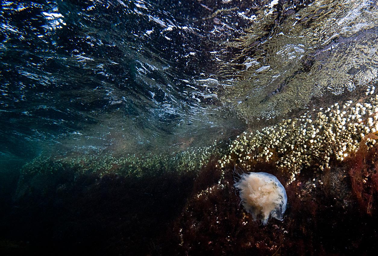 The intertidal zone